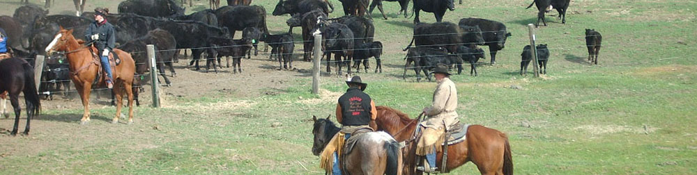 images/banners/0/Cattle Drive.jpg